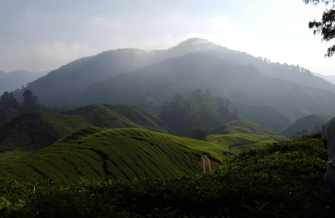 Cameron Highlands Day Tour